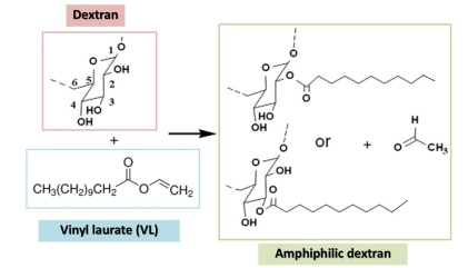 Modification of dextran by adding vinyl ester to obtain the amphiphilic dextran